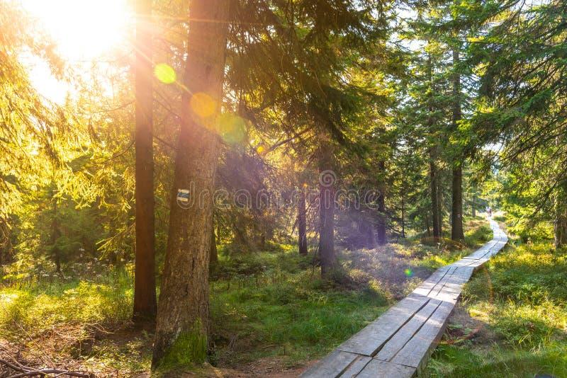 Узкий туристский деревянный путь в лесе на солнечный день Гигантские горы, Krkonose, чехия стоковые фотографии rf