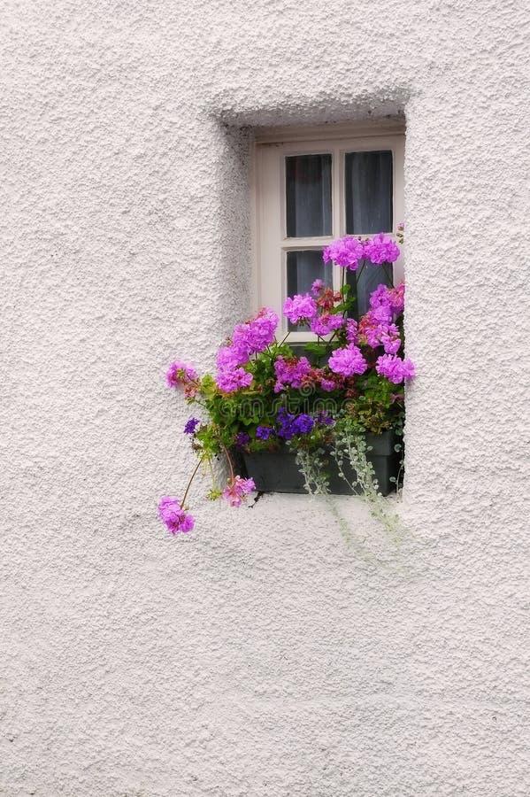 Узкое окно с цветками гераниума стоковое фото