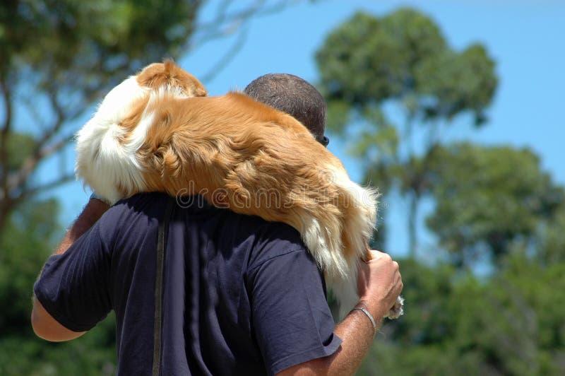 укладывайте рюкзак поврежденная собака стоковое фото rf