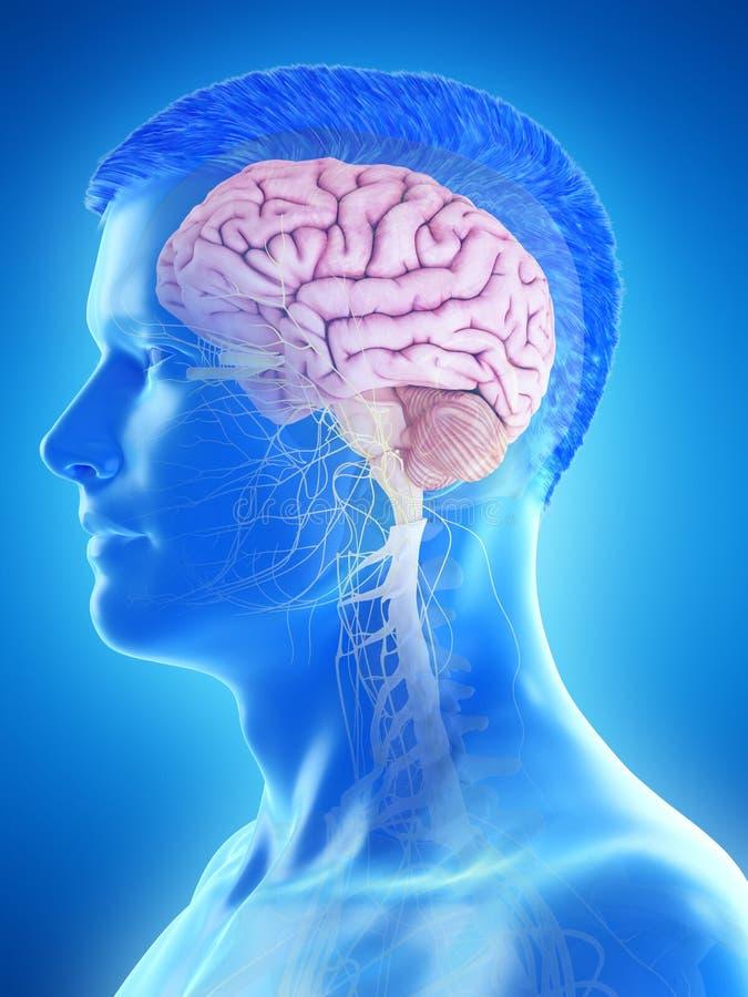 Укомплектовывает личным составом мозг иллюстрация вектора
