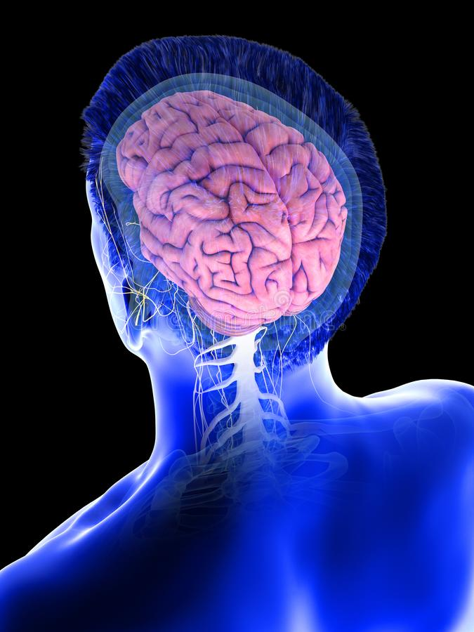Укомплектовывает личным составом мозг иллюстрация штока