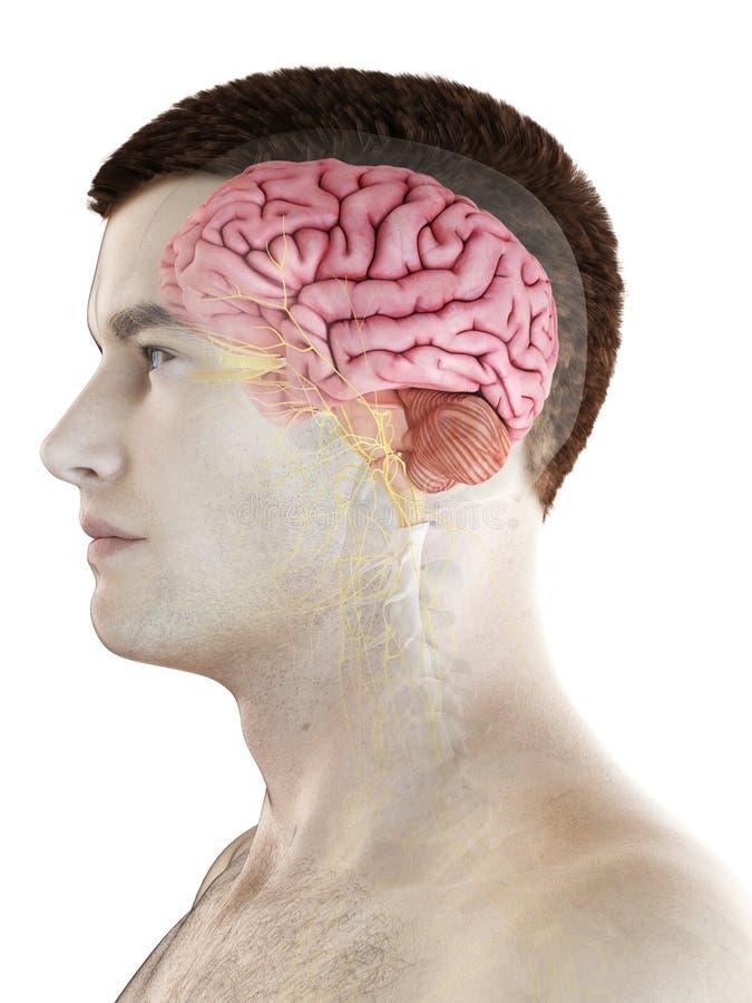 Укомплектовывает личным составом мозг бесплатная иллюстрация