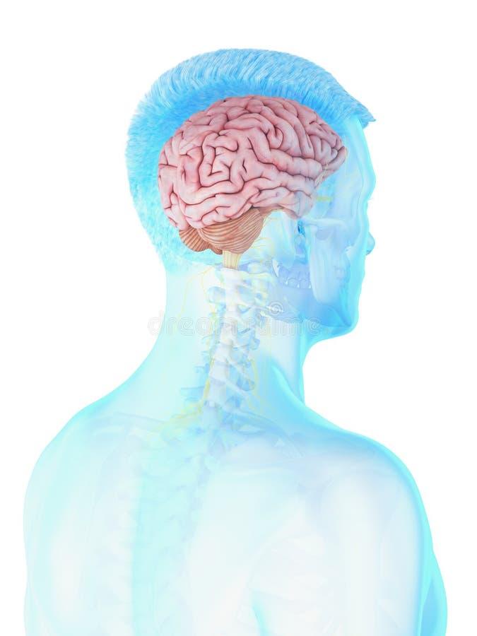 a укомплектовывает личным составом мозг иллюстрация вектора