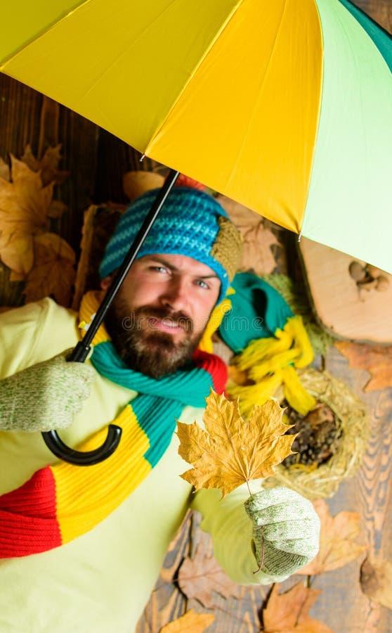 Укомплектуйте личным составом бородатое положение на деревянной предпосылке с взгляд сверху листьев Атрибуты сезона падения Ненас стоковые фото