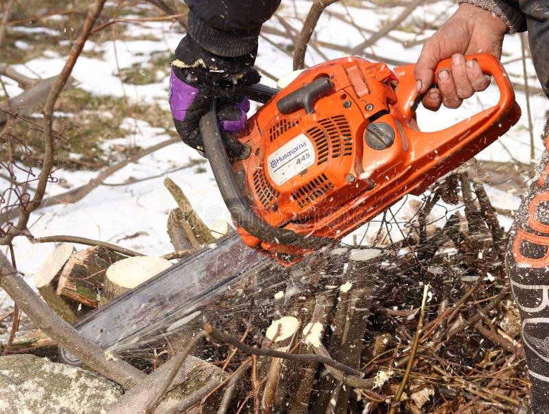 Укомплектуйте личным составом дерево пил с оранжевой цепной пилой Husqvarna для бензина для того чтобы очистить старую перерастан стоковое изображение rf