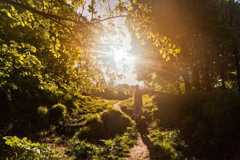 Укомплектуйте личным составом идти на sunlit путь через малые древесины весной стоковые изображения rf