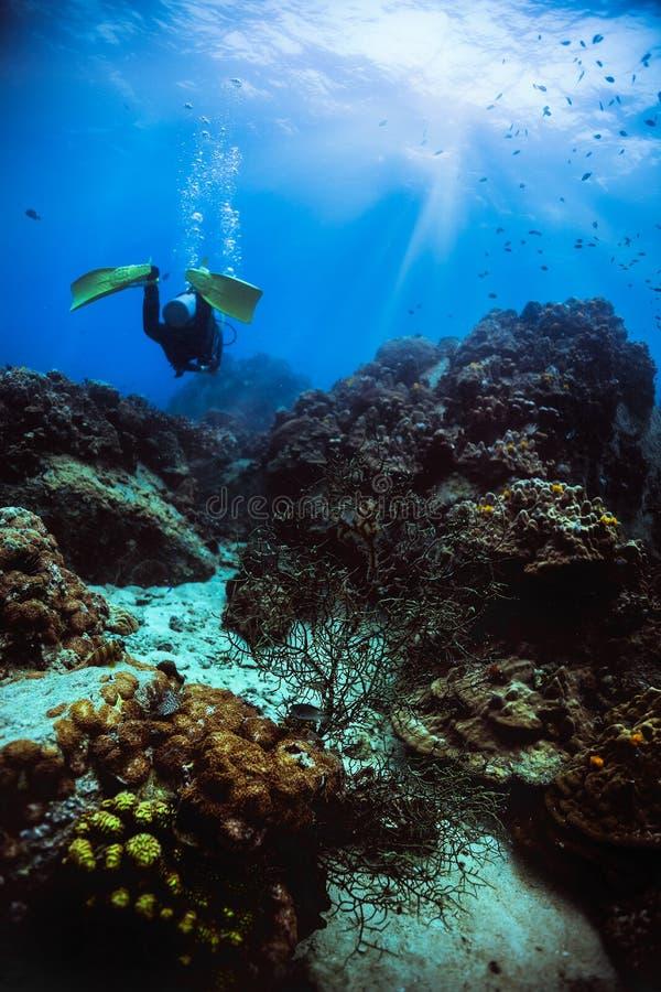 Укомплектуйте личным составом подныривание вдоль underwater кораллового рифа в koh Дао, Таиланде стоковые изображения
