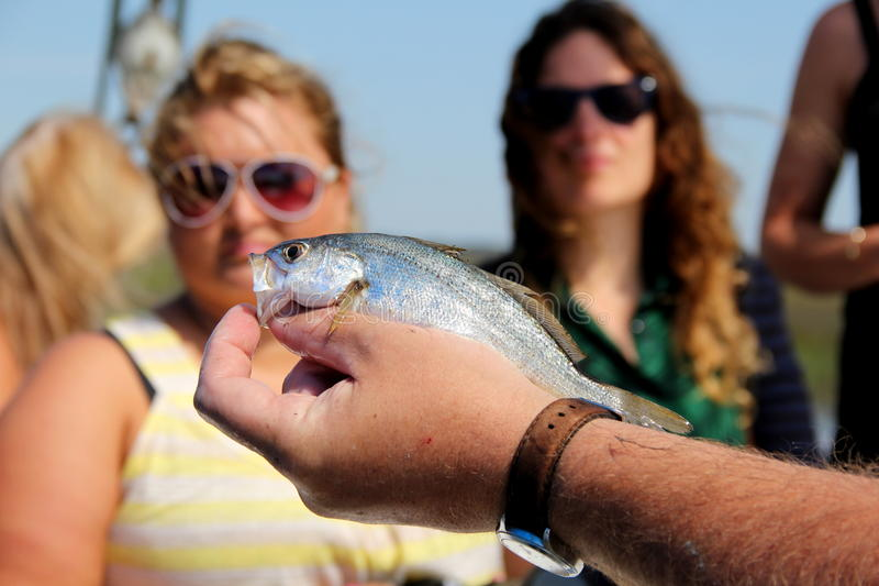 Укомплектуйте личным составом задерживать рыб для посетителей для того чтобы выучить о whille на ДАМЕ ДЖЕЙНЕ траулера рыбной ловл стоковая фотография