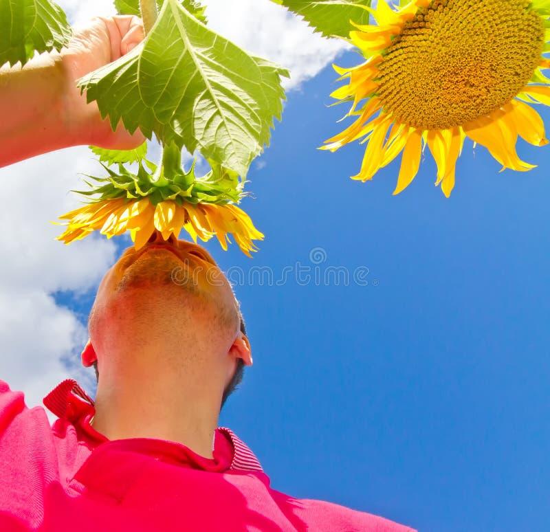 Укомплектуйте личным составом положение в поле цветка солнца - низкую перспективу стоковые фотографии rf