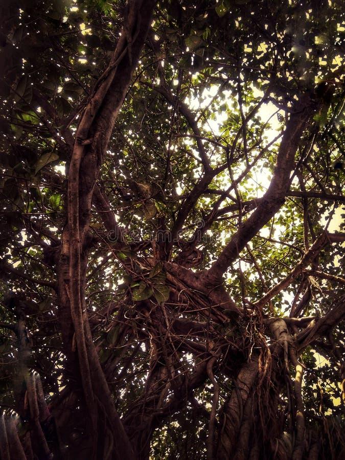 Укорененное дерево стоковое фото