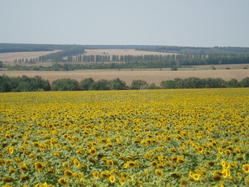 Украина стоковое фото rf