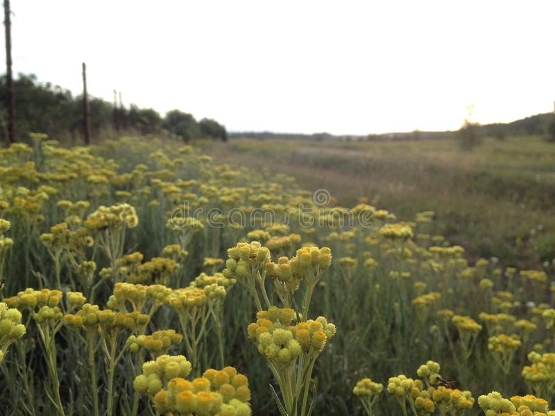 Украинское поле с wildflowers стоковое фото rf