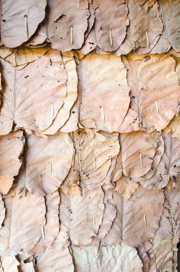 Украсьте стены с сухой предпосылкой листьев стоковые фото