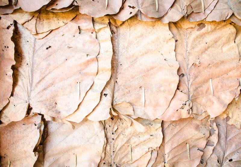 Украсьте стены с сухой предпосылкой текстуры листьев стоковое фото