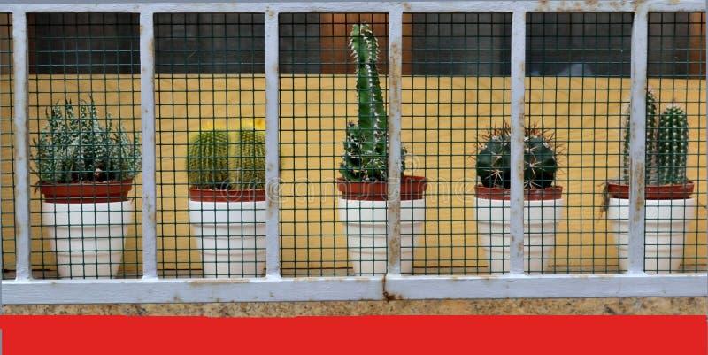 Украшение окна с цветками стоковая фотография