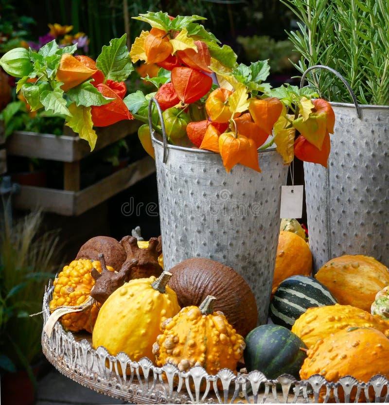 Украшение осени естественное с китайскими фонариками в ведре и цветах тыкв, оранжевых и зеленых стоковое изображение