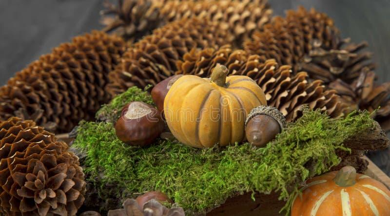 Украшение осени с тыквой в мхе, каштанами, конусами и стоковые изображения