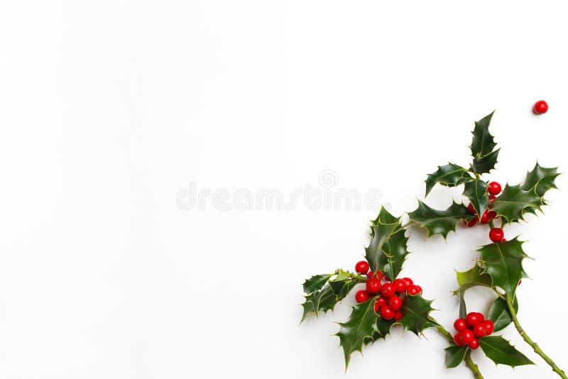 Украшение падуба рождества флористическое на белой предпосылке Вечнозелёное растение выходит с красными ягодами и пустым космосом стоковое фото
