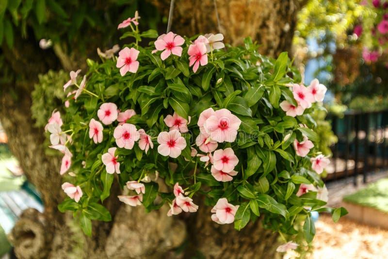 Украшение цветка стоковые фотографии rf