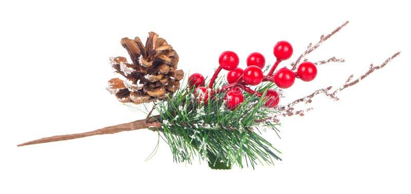 Украшение ягод и конусов ветви рождественской елки красное стоковые фотографии rf