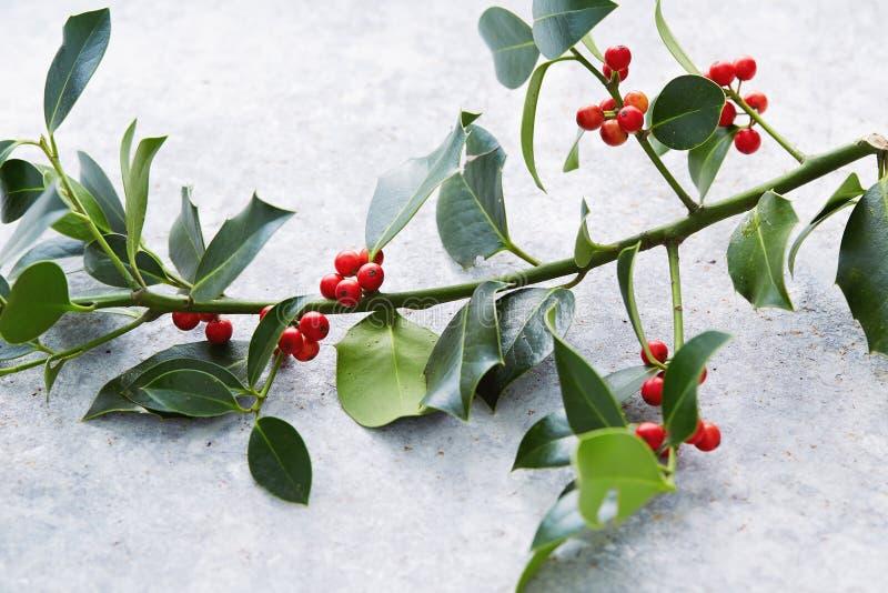 Украшения рождества, падуб выходят с красными ягодами стоковая фотография