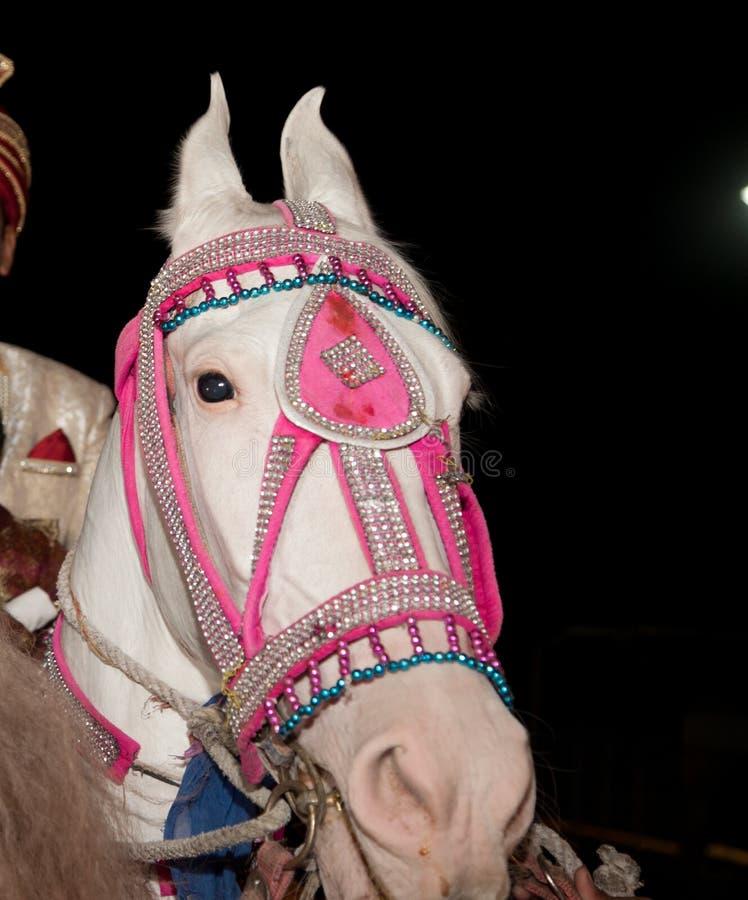 Украшенная лошадь для индийской свадьбы стоковые фотографии rf