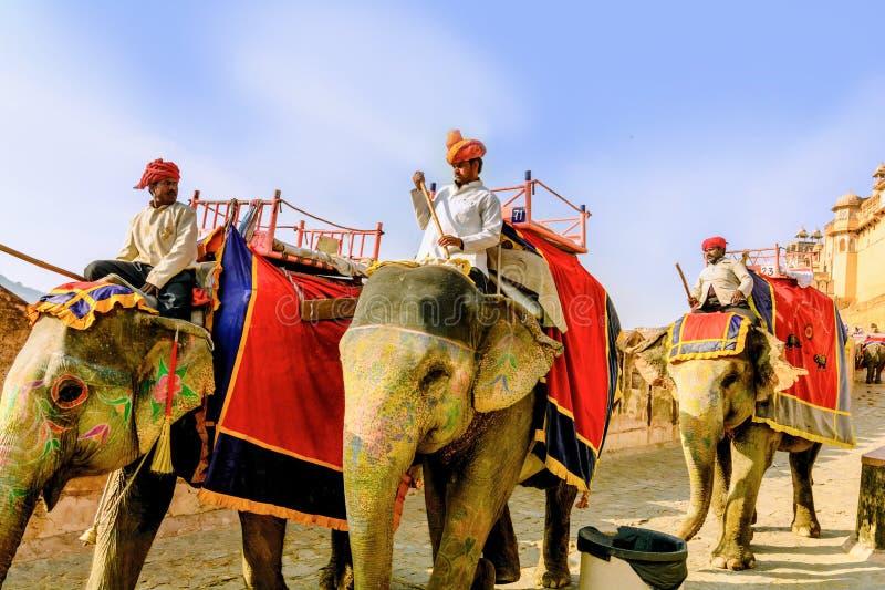 Украшенные слоны носят водителей стоковое изображение rf