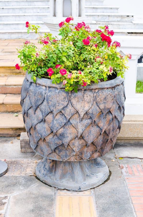 Украдите pipal бак текстуры лист с цветком Bougainvillaea стоковые изображения rf