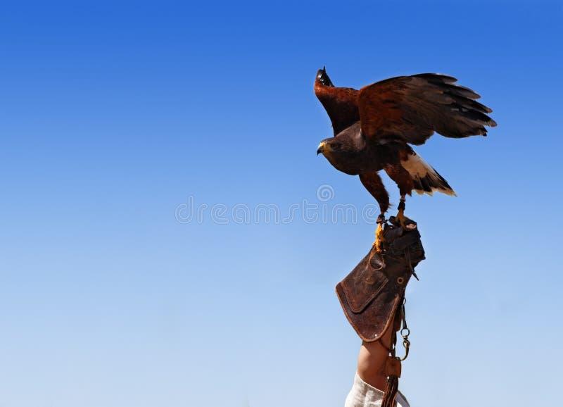 укрощать птицы стоковое фото rf