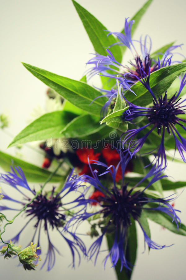Укрощенные Wildflowers стоковые фото