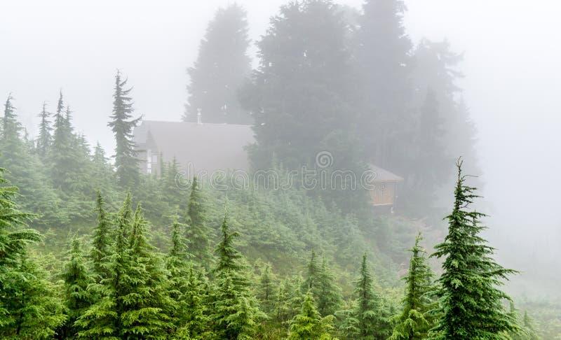 Укрытие в туманном лесе стоковая фотография rf