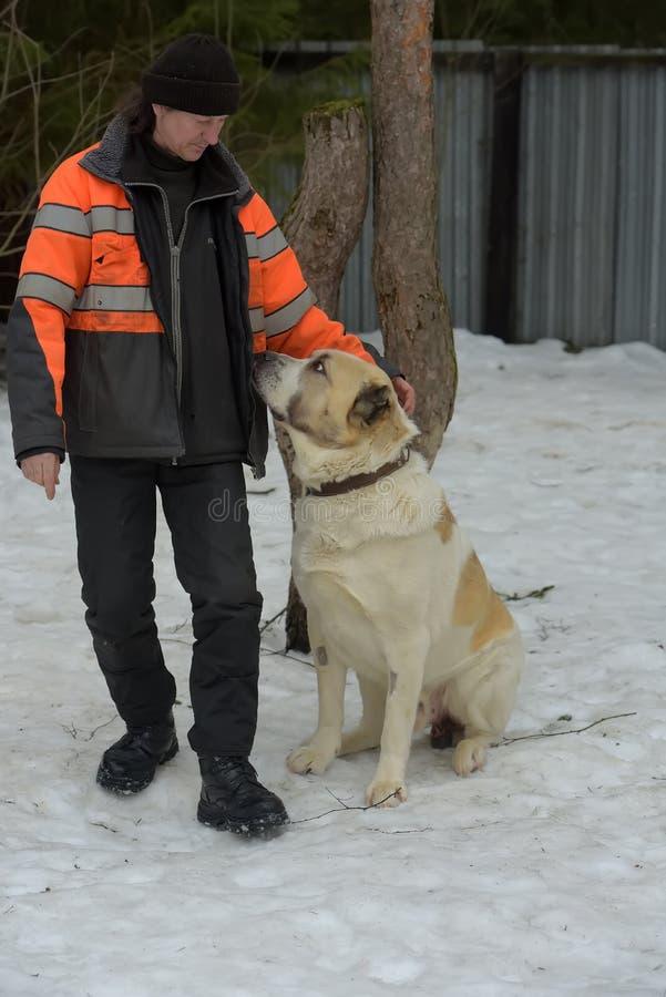 Укрытие для бездомных собак больших пород Работник укрытия с alabai стоковые фото