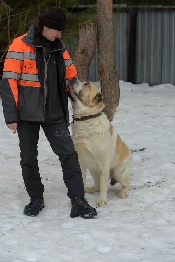 Укрытие для бездомных собак больших пород Работник укрытия с alabai стоковое изображение rf