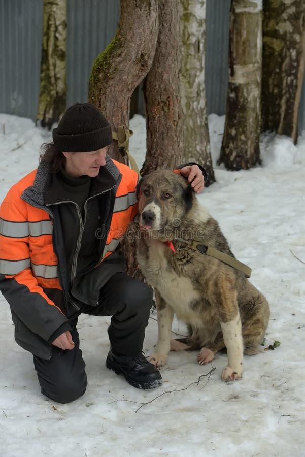Укрытие для бездомных собак больших пород Работник укрытия с alabai стоковые фотографии rf