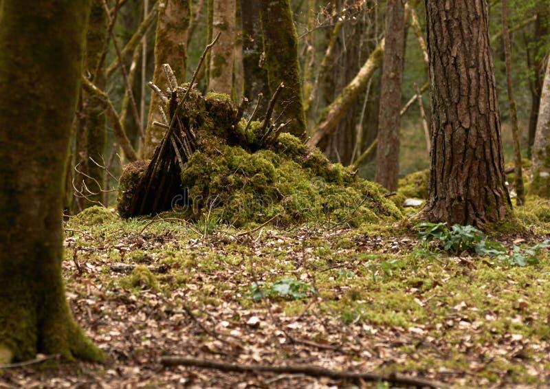 Укрытие леса стоковые фото