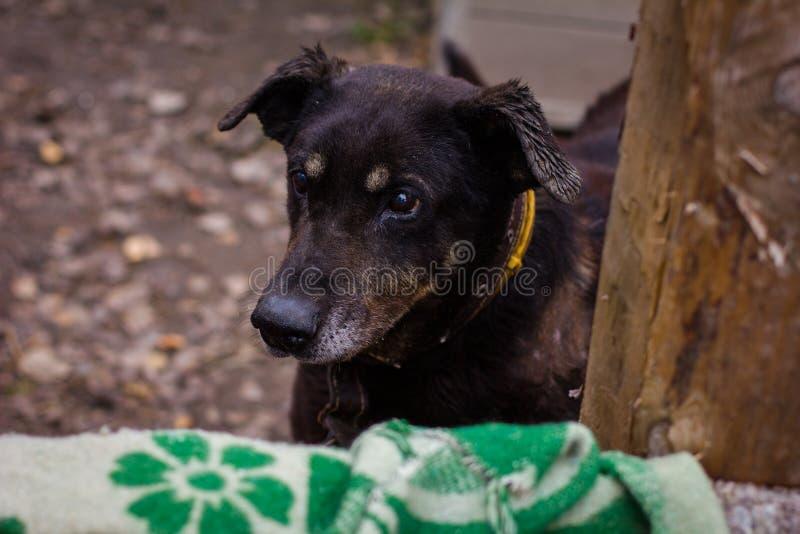Укрытие собаки собаки стоковая фотография rf