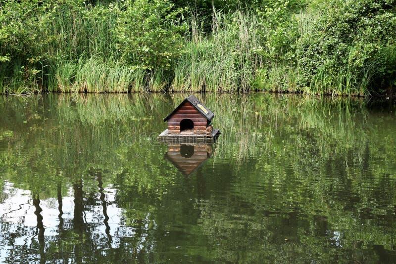 Укрытие утки на озере стоковая фотография rf