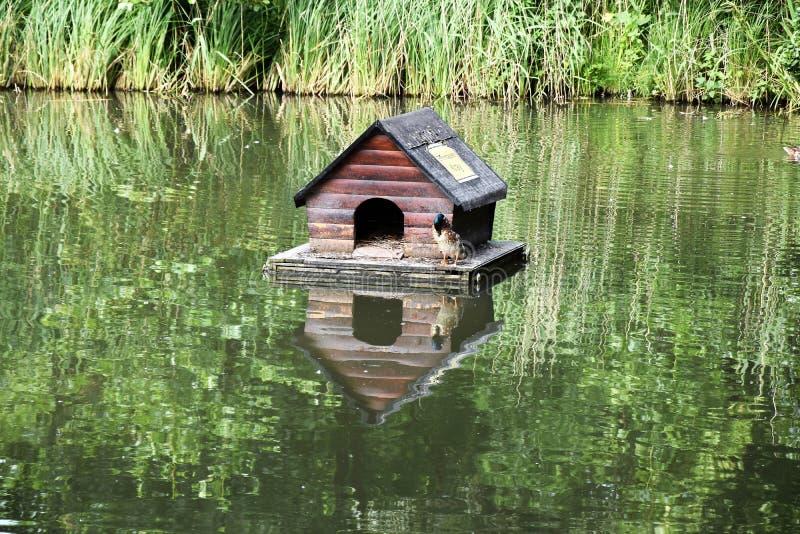 Укрытие утки на озере стоковое изображение