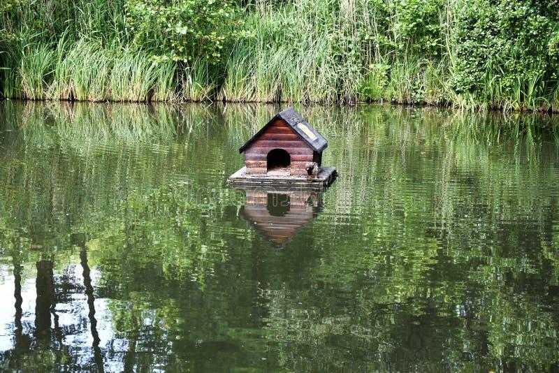 Укрытие утки на озере стоковые изображения rf