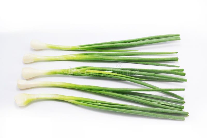 лук изолированный зеленым цветом стоковые изображения
