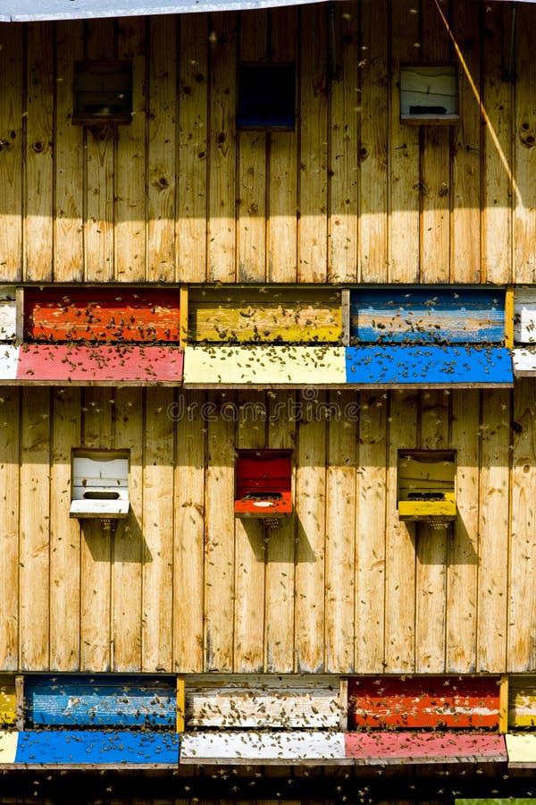 улей, Словакия стоковая фотография rf