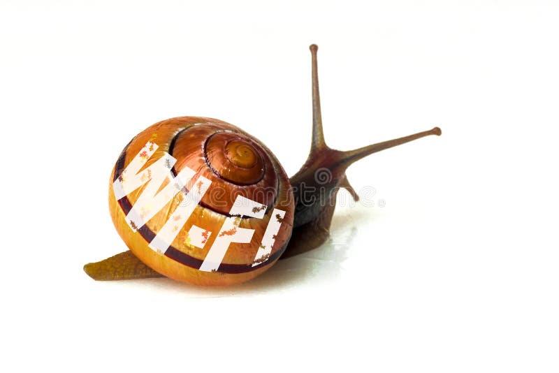 Улитка Брауна и литерность - символ Wi-Fi беспроводной сети стоковая фотография rf