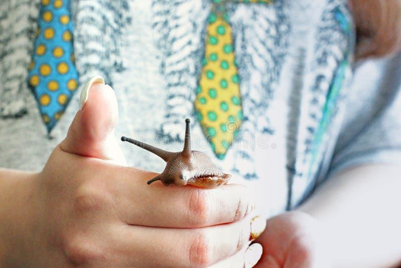 Улитка в руке стоковое изображение rf