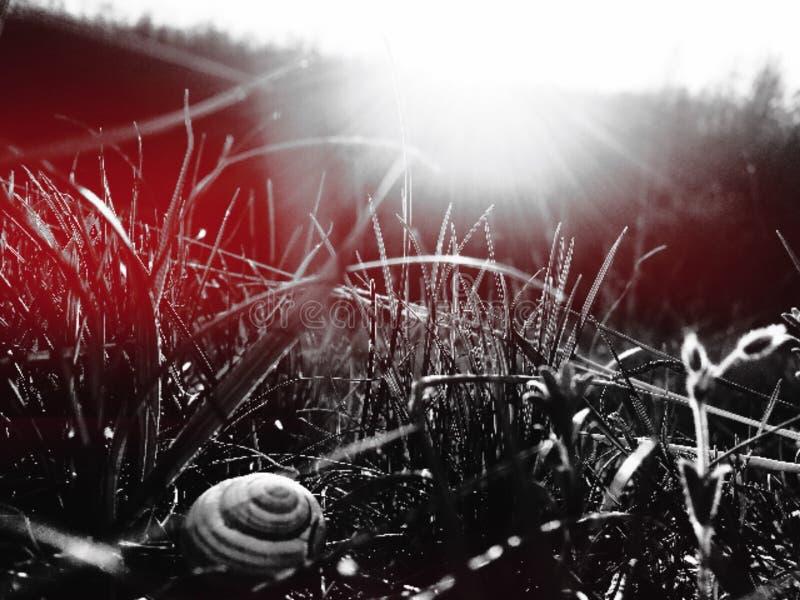 Улитка в траве стоковые изображения