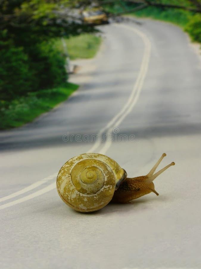 улитка дороги скрещивания стоковое фото rf