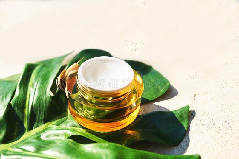 Улитка и опарник сливк кожи на зеленых лист monstera на конкретной предпосылке стоковая фотография