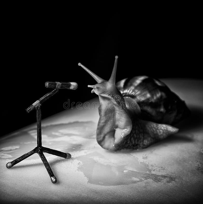 Улитка Achatina на темной предпосылке Большой крупный план улитки Животный мир стоковые изображения rf
