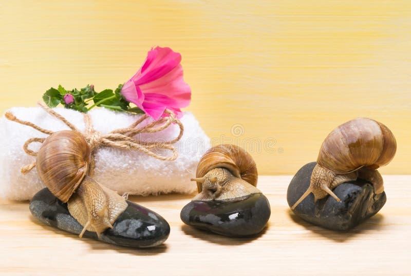 3 улитки сидя на камнях на концепции предпосылки курорта стоковая фотография