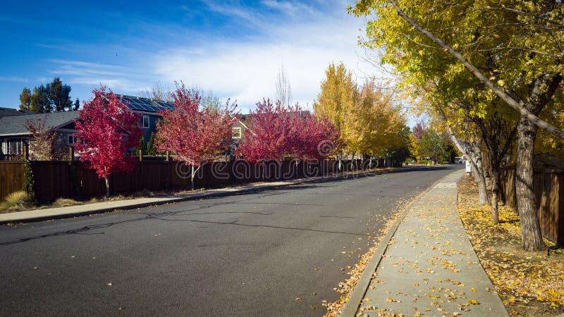 Улица в цветах падения стоковое фото rf
