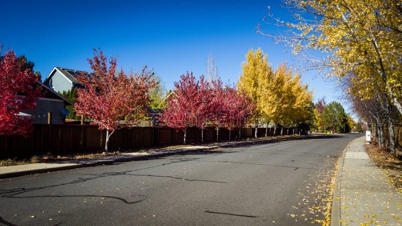 Улица в цветах падения стоковое изображение rf